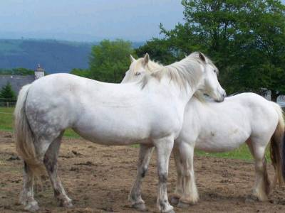 horses living naturally