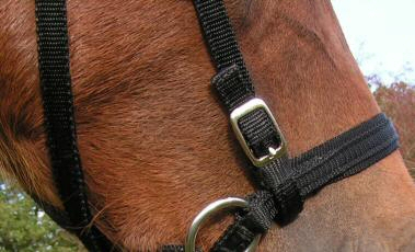 Webbing Bitless Bridle (washable)