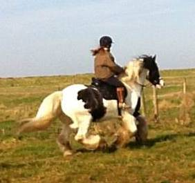 Emily & Monty cantering in Dr Cook Bitless Bridle