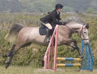 Isha jumping in the bitless bridle