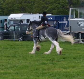mighty blue clydesdale