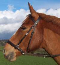 close up of leather crossunder bitless bridle