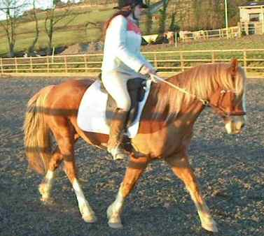 hayley doing dressage in the bitless