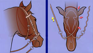 Diagram illustrating how the Bitless Bridle works