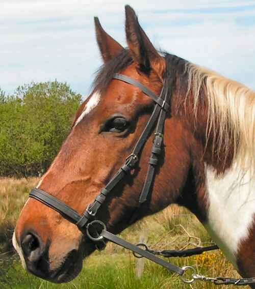 Beta Bitless Bridle - One left chestnut small or extra small [ Close Window ]