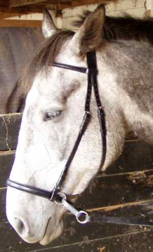 Harry in his leather Bitless Bridle