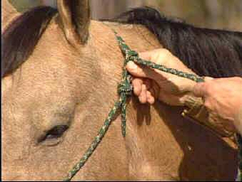 how to tie rope halter