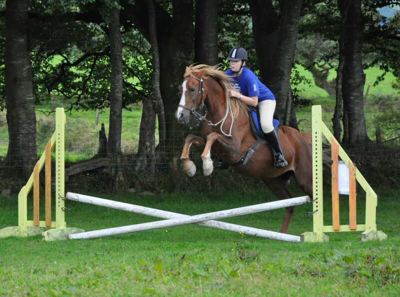 Events - Natural Horses, Wholistic Horsemanship : Bitless