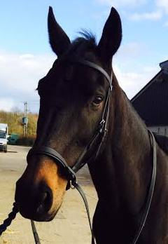 New BIOTHANE Cross Over Bitless Bridles with rubber Reins in 4 colour /& 3 sizes